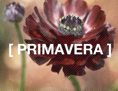 Promoção Primavera  (201)4
